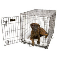 Midwest Single Door iCrate Dog Crates - 1500 Serie