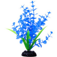 Top Fin Blue Pond Penny Plant
