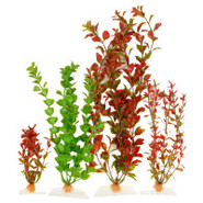 Rotala, Moneywort and Red Ludwigia Artificial Plan