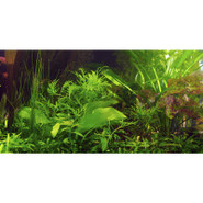 Top Fin Tropical Aquarium Cling