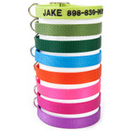Coastal Pet Products Personalized Nylon Buckle Dog
