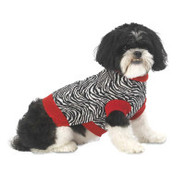 PetRageous Designs Zoe's Zebra Dog Sweater