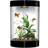 biUbe 9 Gallon Black Aquarium Starter Kit